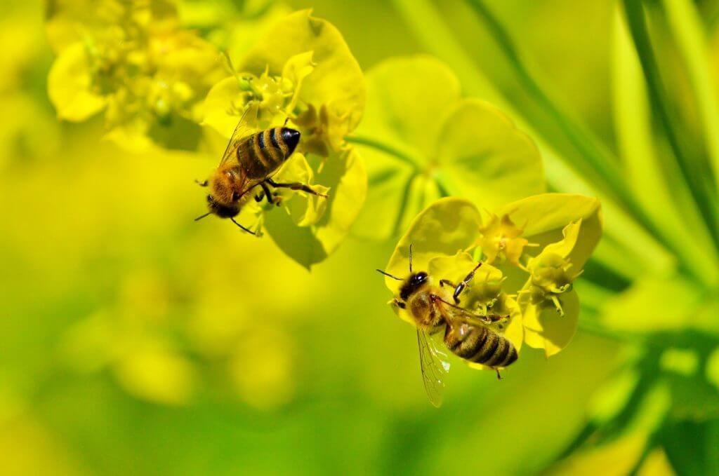 Jede Biene zählt!  Ihre Hilfe ist gefragt.